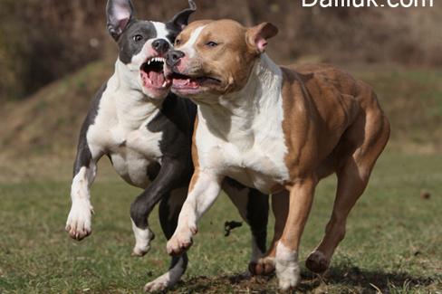 أخطر أنواع الكلاب في العالم.. احذر من اقتنائها